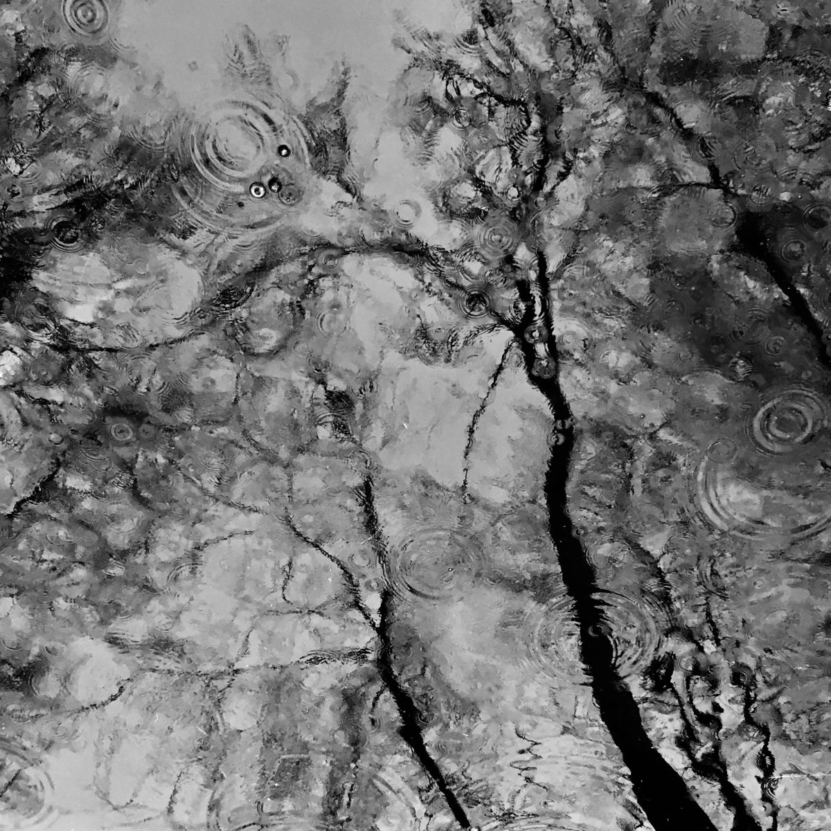 Bäume in einer Pfütze